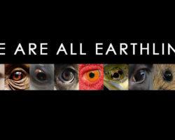 Documentales Que Te Ayudarán A Reflexionar Sobre Tu Trato Hacia Los Animales